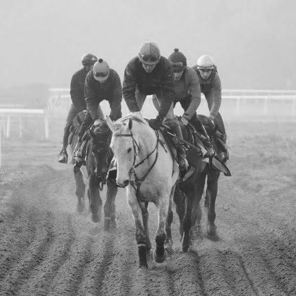 horses leading string macaire hugo merienne